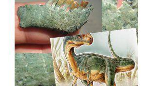 Un nene de siete años descubrió un extraño tipo de dinosaurio