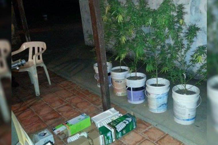 Crespo: secuestraron cámara de secado de marihuana