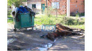 Tirada. El dueño de la yegua muerta esperaba ayer que la fueran a buscar.  Foto UNO/Juan Ignacio Pereira