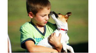 Un parásito del perro puede dejar ciegos a los chicos