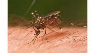 Confirmaron un caso positivo de dengue en la ciudad de Santa Fe