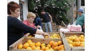 Reprogramación de Citrus Para Todos en Parana