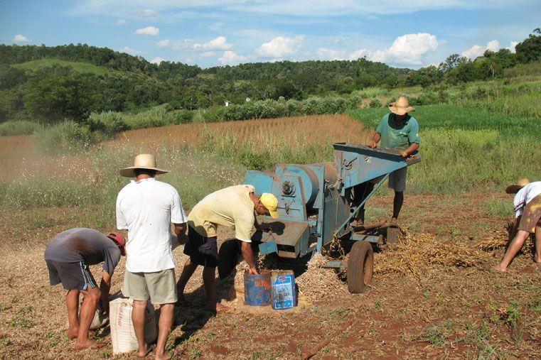 Chacra. La idea es que el trabajo en relación con la tierra puede recuperar el arraigo y el concepto de que no se debe imponer el proceso individual.
