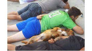 Un perro se rindió junto a una banda narco en un operativo de la policía