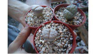 Coleccionistas de cactus & suculentas: Una pasión sin espinas