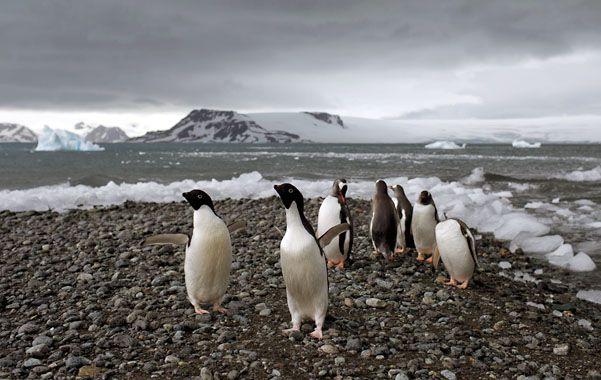 La Antártida alberga los secretos y la clave del futuro de la humanidad