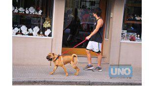 Educación. La materia pendiente en la comunidad es aprender a ser dueños responsables de los animales. Foto UNO/Juan Manuel Hernández