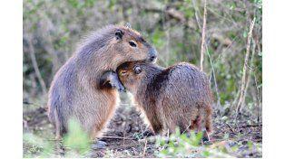 Foto Gentileza/ Imágenes de Mariano Calvi y Facebook oficial Parque Nacional El Palmar