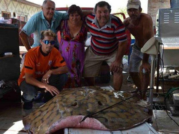 Pescaron una raya gigante e hicieron 80 kilos de milanesas