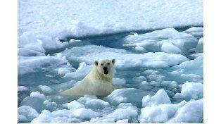 Calentamiento global: 2014 fue el más caliente desde que se tienen registros