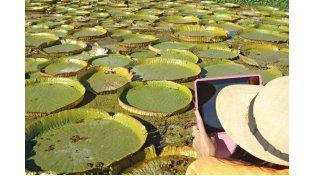 PARA UN CUADRO. En Diamante hacen excursiones para fotografiar la flor del irupé y el paisaje. (Foto gentileza Secretaria de Turismo Diamante)
