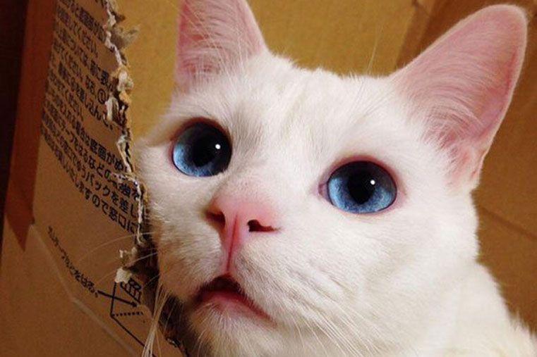 Este es el gato más feo cuando duerme de Japón