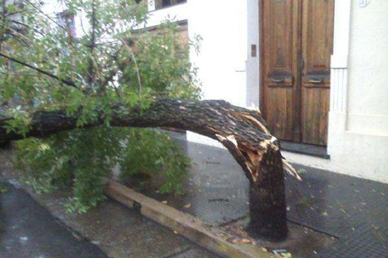 Los vientos superaron 95 kilómetros por hora. (Foto Diario El Sol)