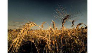 Datos. Se destacó que en 2014 hubo una baja del promedio de trigo del 9