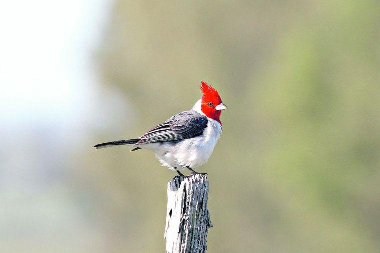 Paraísos del canto, el vuelo y los colores de las aves