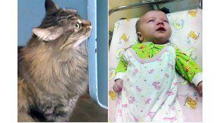 Una gata salva a un bebé de morir congelado en la calle luego ser abandonado