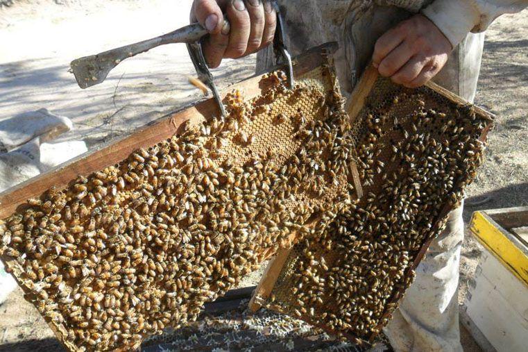 Requerida. Desde la Entre Ríos profunda se produce miel de primera calidad y que seduce a mercados externos. Foto: Gentileza/Jorge Luis Marchesini
