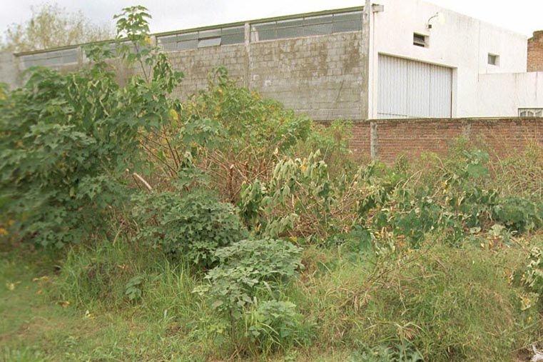 Compromiso. Los propietarios de terrenos deben conservarlos limpios y desmalezados.