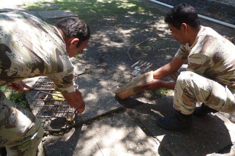 La Dirección Prevención Delitos Rurales liberó las especies.