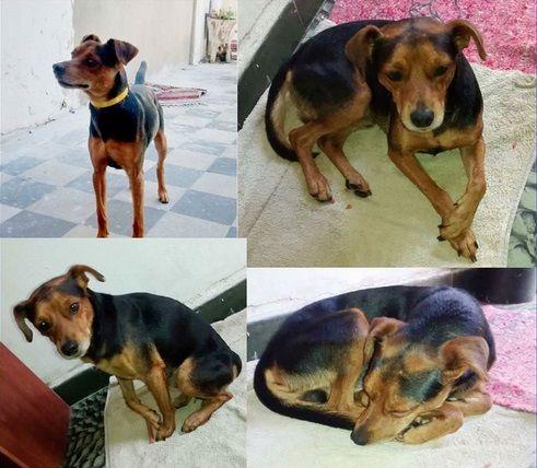 Perrito abandonado busca familia responsable y cariñosa