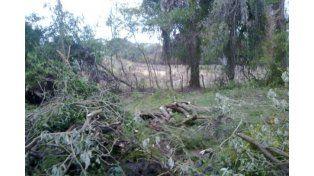 El municipio de Concordia busca al responsable de las talas en la reserva Parque San Carlos