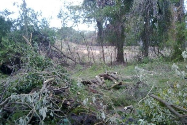 Denuncian tala de árboles en la reserva natural del Parque San Carlos