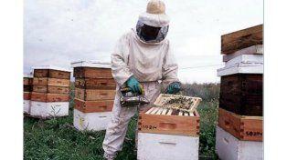 Apicultores aseguran que la cosecha de miel es reducida