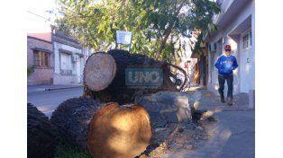 Por calle Feliciano. Sobre los troncos