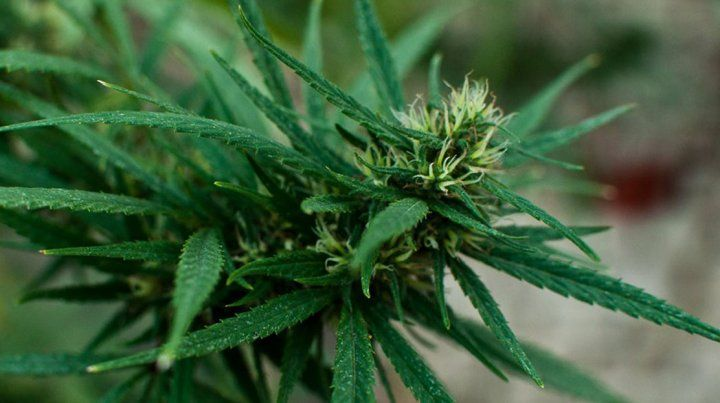 National Geographic presentará un episodio sobre Marihuana Medicinal