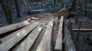 Talan árboles en un sitio histórico en La Picada