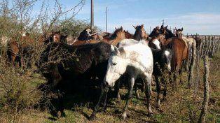 Los caballos desnutridos de Viale podrían ser sacrificados