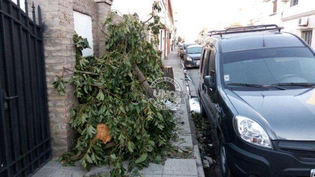 Ramas de un árbol aguardan ser recogidas