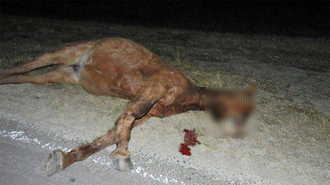 Un colectivo chocó a un caballo cerca del ingreso a Viale