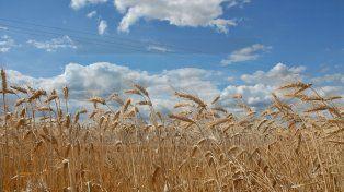 Entre Ríos no llegará a concretar la proyección inicial de implantación de trigo