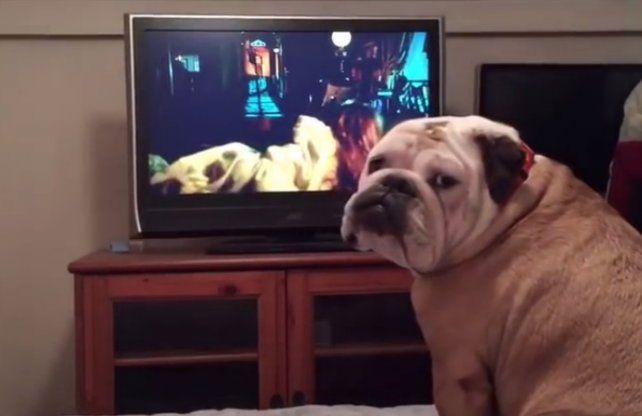 Un perro mira una película y le advierte algo a la protagonista