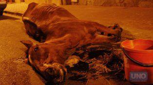 El caballos que tiraba un carro perdió las fuerzas en calle Italia. Foto UNO archivo.