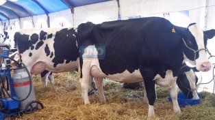 Facultad argentina destaca los beneficios de la leche de vaca