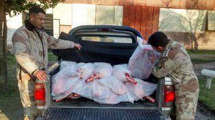 Decomisan 500 kilos de carne porcina
