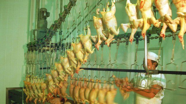 Advierten sobre posibles despidos en el sector avícola