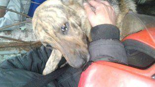 Piden ayuda para perros rescatados