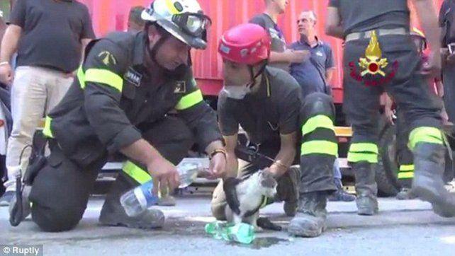 Seis días después del terremoto, rescatan a gatita entre los escombros