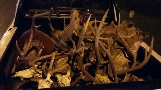Desbarataron banda de cazadores furtivos con importante arsenal