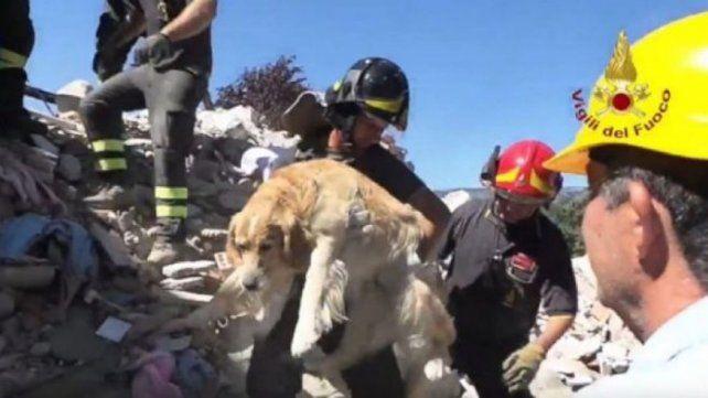 Un perro fue rescatado sano y salvo después de estar 9 días bajo los escombros del terremoto de Italia