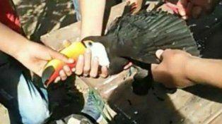 Indignación en Salta: tres jóvenes torturaron a un tucán hasta matarlo