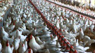 Las granjas. Entre Ríos concentra el 56% de los establecimientos.