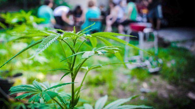 Funciona en Córdoba la primera clínica de la marihuana
