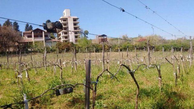 Hacen un relevamiento de viñedos para crear La ruta del vino entrerriano