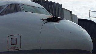 Avión aterrizó de emergencia luego de chocar contra un buitre a más de 1500 metros de altura