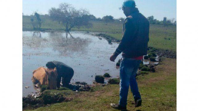 Bomberos rescataron un caballo atrapado en el barro