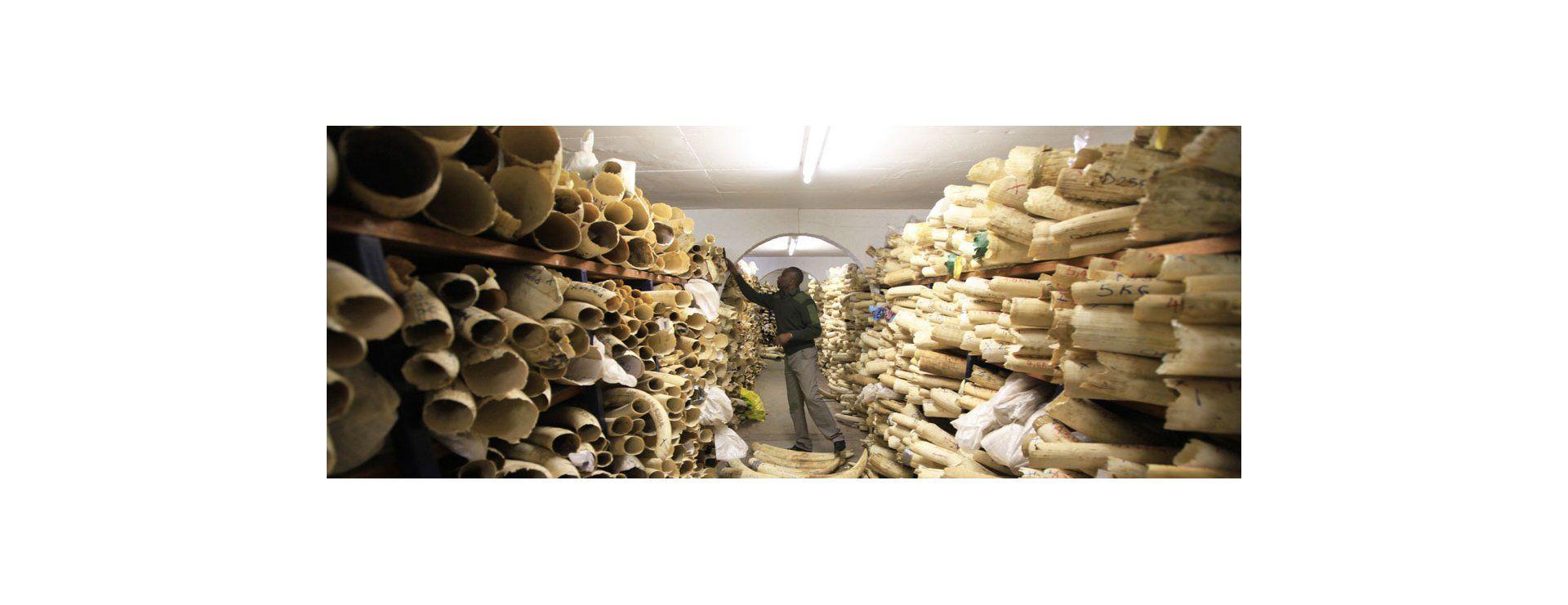 África, dividida por el comercio de marfil